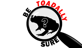 be toadally sure, cane toad, identification